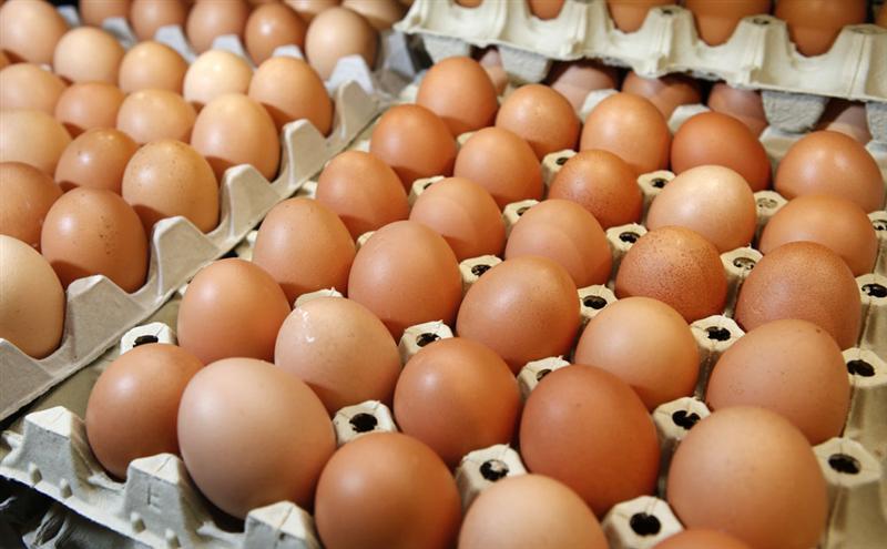Oeufs contaminés : les consommateurs changent leurs habitudes