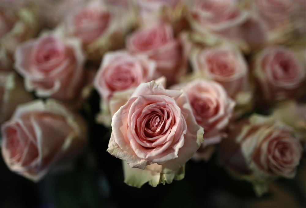 Les cr anciers d 39 emova plus gourmands que pr vu - Au nom de la rose fleuriste ...